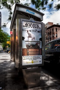 Phone Kiosk in Manhattan with the Clean Beds Delivered campaign around NYC and the boroughs featuring Coco, a French Bulldog. Photo by Salem Krieger.